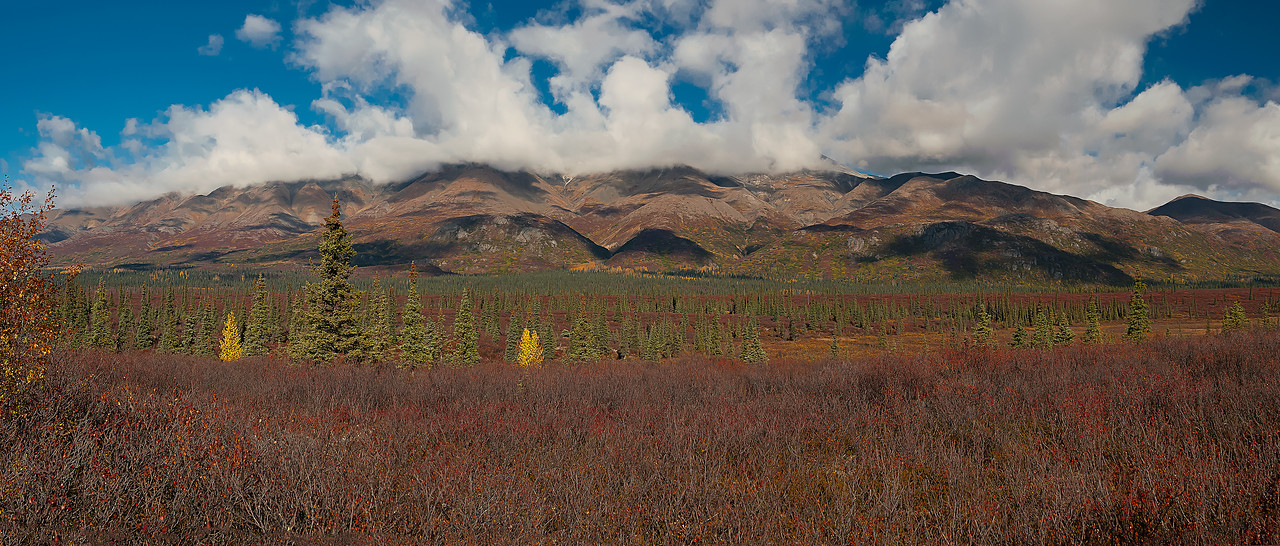 Denali, National, Park