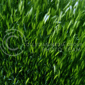 grasses blow in the wind at Zion National Park