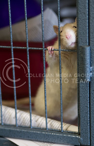 Russell Edem | Collegian Mr MaGoo Hangs out in is cage at the T. Russell Reitz Animal Shelter located at 605 Levee Drive Manhattan KS
