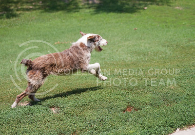 Russell Edem | Collegian Glory enjoys a run around the backyard at the T. Russell Reitz Animal Shelter, located at 605 Levee Drive in Manhattan KS.