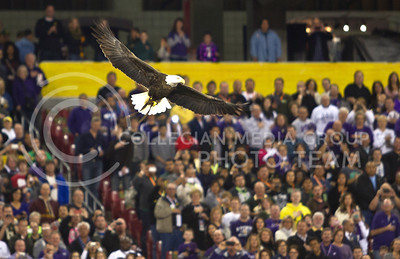 A bald eagle flew around The University of Phoenix Stadium before the Fiesta Bowl January 3, 2013.   (Photo by Evert Nelson / Collegian)