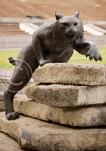 (Photo by Taylor Alderman | Collegian)   Located outside of the K-State Alumni Center, is a bronze statue of a wildcat posed on native limestone. The statue has become a popular place for people to pose for pictures.