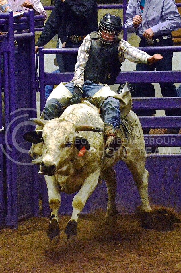 (Photo by Parker Robb   Collegian)<br /> <br /> A bull rider holds on for as long as possible as the bull tries to throw him off at the 2013 K-State Invitational Bull Bash January 25 in Weber Arena. Thirty top bull riders will descend on Manhattan to compete in the 2014 Bull Bash, hosted by the K-State Rodeo Club, Friday and Saturday night at 7:00 at Weber Arena.