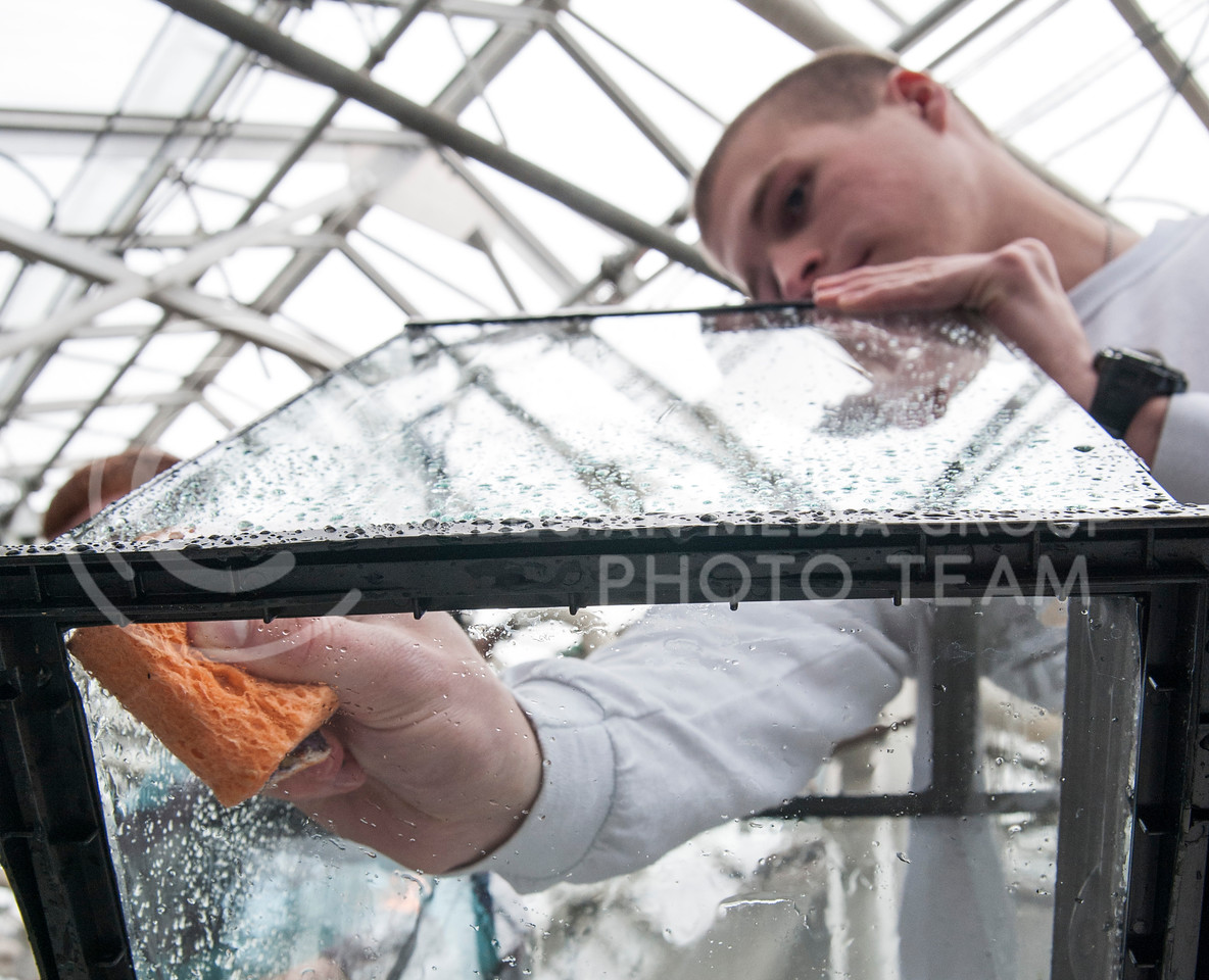 (Photo by Emily DeShazer | The Collegian)<br /> <br /> Joel Blankenship, freshman in political science scrubs the bottom of an aquarium that may hold tarantulas, cockroaches, or other animals at the K-State Insect Zooon Jan. 20, 2014.