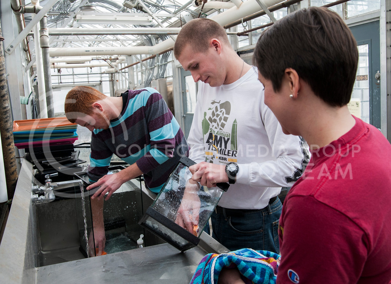 (Photo by Emily DeShazer | The Collegian)<br /> <br /> Volunteers Tyler Anderson, freshman in biology, Joel Blankenship, freshman in political science, and Amber Vennum, assistant professor of family studies and human service clean aquariums for the K-State Insect Zoo as part of HandsOn Kansas State Martin Luther King Jr. Day of Service.