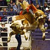(Photo by Parker Robb | Collegian)<br /> <br /> In the last ride of the night, bull rider Matt May holds tight as his bull, Gator, sends both of them flying during the third and last round in the K-State Invitational Bull Bash, hosted by the K-State Rodeo Club, at Weber Arena February 1, 2014. Despite falling off after only two seconds, May held on to his lead in the competition to become the overall champion of the thirty riders who competed.