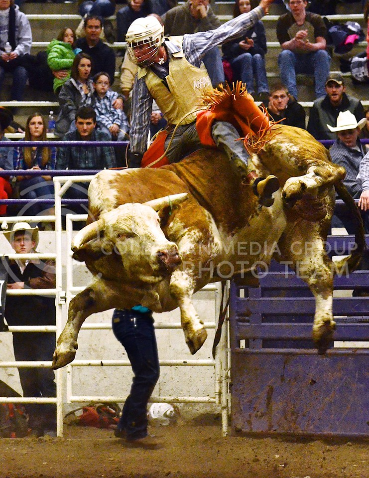 (Photo by Parker Robb   Collegian)<br /> <br /> In the last ride of the night, bull rider Matt May holds tight as his bull, Gator, sends both of them flying during the third and last round in the K-State Invitational Bull Bash, hosted by the K-State Rodeo Club, at Weber Arena February 1, 2014. Despite falling off after only two seconds, May held on to his lead in the competition to become the overall champion of the thirty riders who competed.