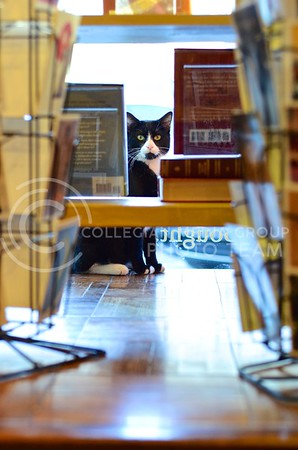 (Photo by Parker Robb | Collegian)  Oliver, who is quite shy because he used to live under the Varsity Donuts Truck in Aggieville, peers between books on display in the storefront of his new home in the Dusty Bookshelf January 23, 2014. Before Oliver, the Dusty Bookshelf had two other cats named Cleo and Maxine.