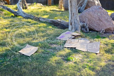 (Photo by Parker Robb | Collegian)  Broken-down cardboard is all that remains after Hadiah, the sumerian tiger at the Phoenix zoo, has done her work on December 26, 2013. Hadiah predicted a wildcat victory over Michigan in the Buffalo Wild Wings Bowl December 28.