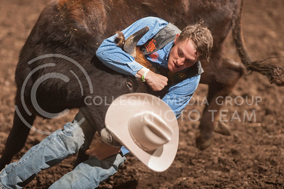 Tanner Stec, from Western Oklahoma State College, brings down a steer during the steer wrestling finals Sunday at the K-State Rodeo. (Evert Nelson | Collegian)