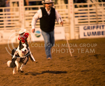 Whiplash the Cowboy Monkey rides his gallant steed at the Kaw Valley PRCA Rodeo in CiCo Park on July 25, 2015.