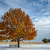 A picnic table sits under the shade of an oak tree, waiting for people to warm it's benches on Nov. 16, 2014.  The recent cold front dropped over 3.5 inches of snow in different parts of the state.  (Rodney Dimick | The Collegian)