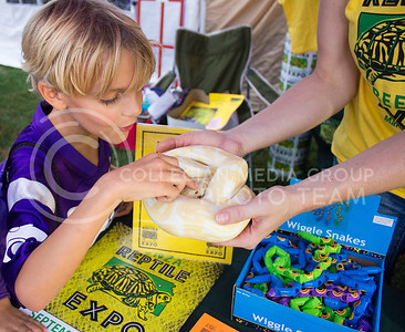 (Photo by Alexander Shaw | The Collegian)  Oliver Lee eagerly pokes a ball python to see if it's awake at Purple Power Play on Aug. 28, 2014.