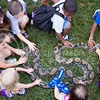 (Photo by Alexander Shaw | The Collegian)<br /> <br /> Curious children gather around a snake at Purple Power Play in the Park Aug. 28, 2014.
