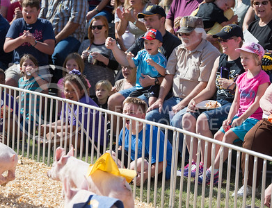 The crowd cheers for the pigs as they race during the Kansas State Fair on Sept. 12, 2015. (George Walker | The Collegian)
