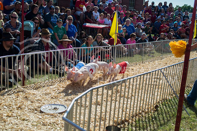 People watch the Hedrick's Pig Race during the Kansas State Fair on Sept. 12, 2015. (George Walker | The Collegian)
