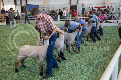 Goat showing at the state fair in Hutchinson, Ks Sept. 12, 2015. The fair ran from Sept. 11 to Sept. 20.  (Nathan Jones | The Collegian)
