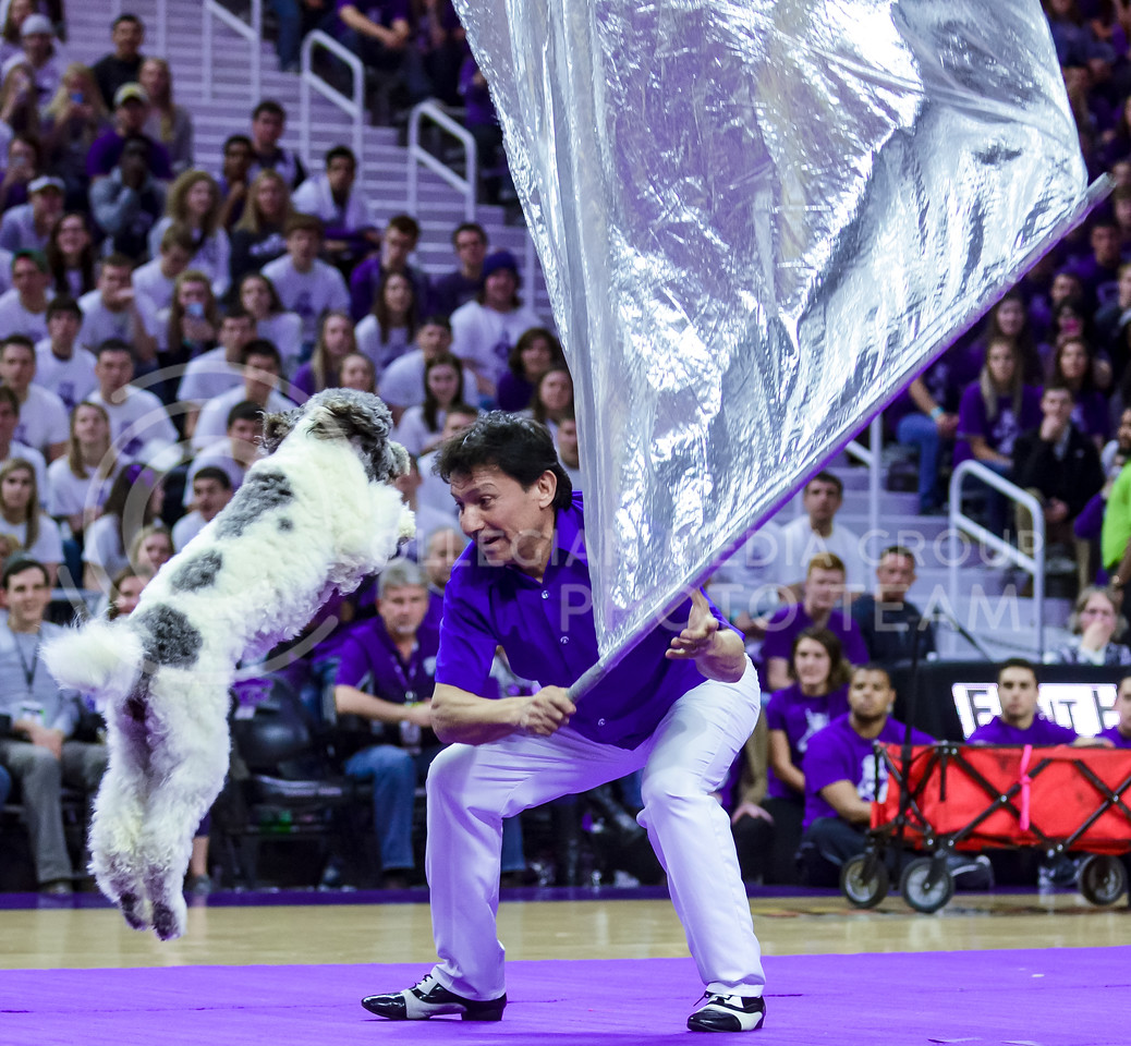 Maggie, one of the Olate Dogs, jumps over a flag waved by trainer Richard Olate during the dogs' performance at halftime of the men's basketball game against Oklahoma State Jan. 23, 2016. (Parker Robb | The Collegian)