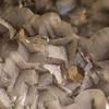 Ramsey Mine - Chlorargyrite on calcite