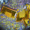 Wulfenite with mimetite from the Ford Mine (aka Thunderbird Mine), FOV about 6mm