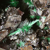 Malachite from Silver Hill Mine<br /> FOV about 6mm