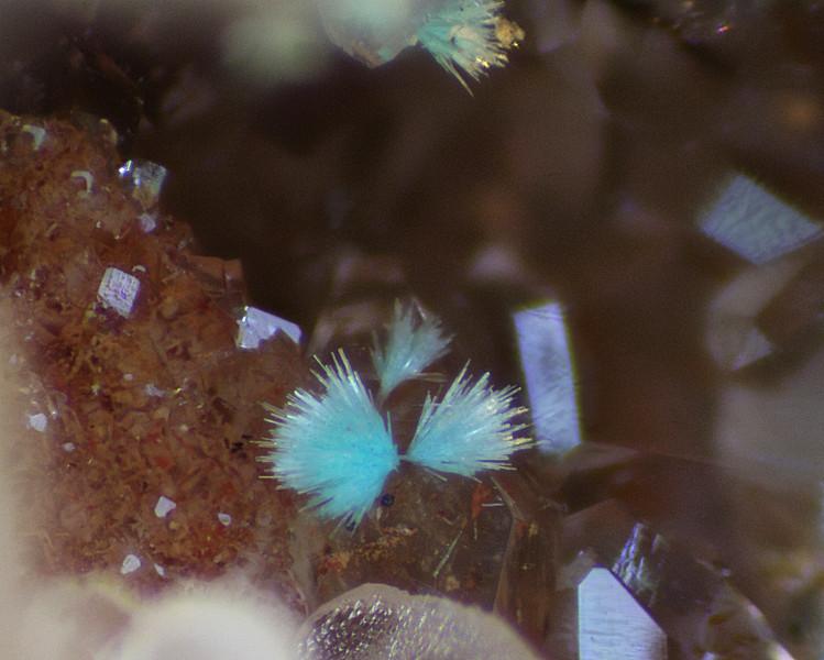 Tiny bit of aurichalcite from the McCracken mine. FOV 1.5mm.