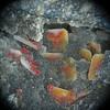 Finch mine quartz over vanadinite & wulfenite