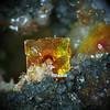 Finch mine, bicolor wulfenite