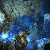 Azurite from Black Copper wash near Kelvin