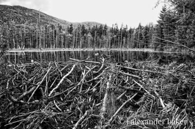 Adirondack Beaver Pond 2