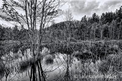 Adirondack Beaver Pond