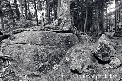 On the Ausable, Wilmington Flume, Adirondack Mountains, NY