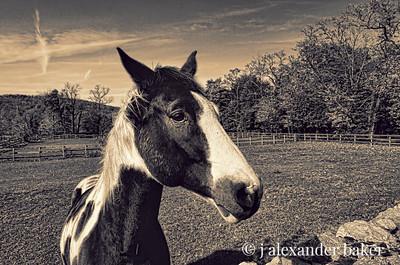 Ramapo Pony