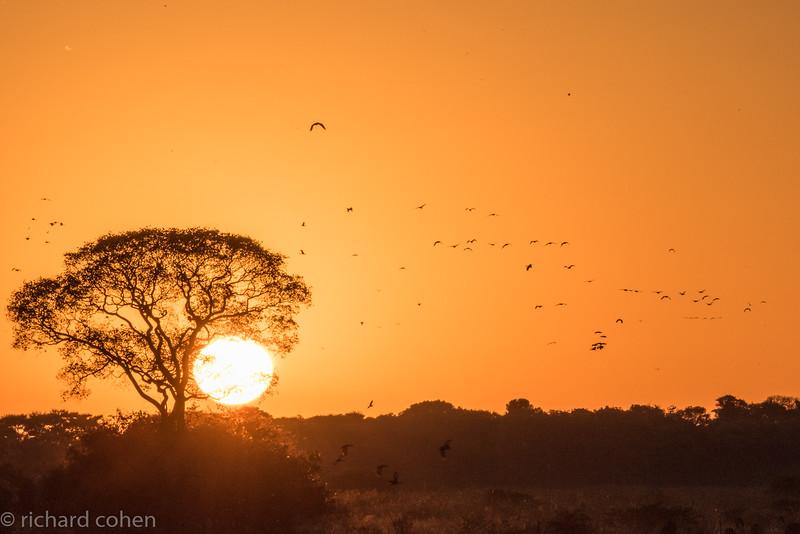Good morning Pantanal!