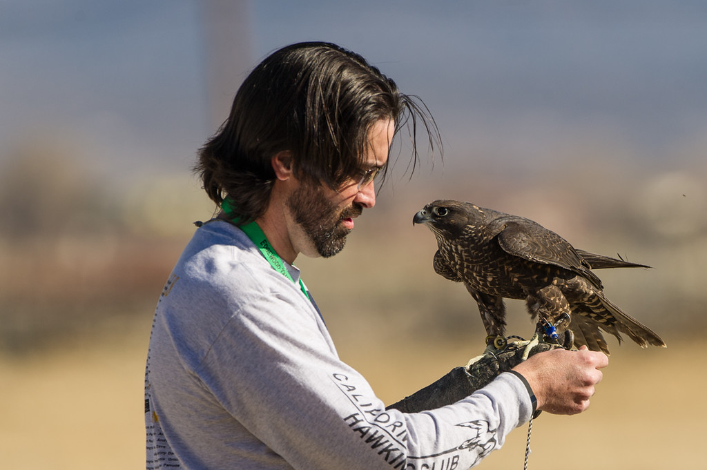 Falconer with Peregrine Falcon. He was going to do a demo with the falcon chasing a drone, but the falcon had a better idea and flew off across the valley.