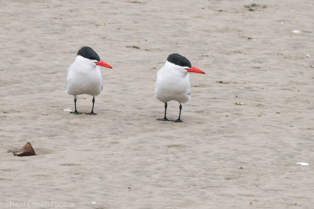 Terns turned....