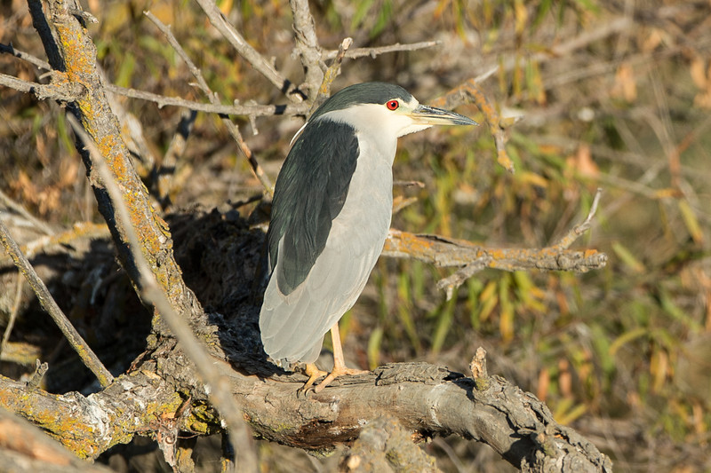 There were a couple dozen heron hanging out in one spot on a river bank late in the day...