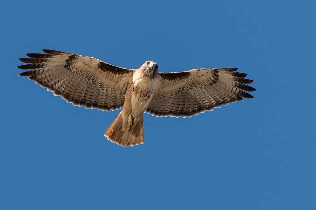 Immature RTH in flight.