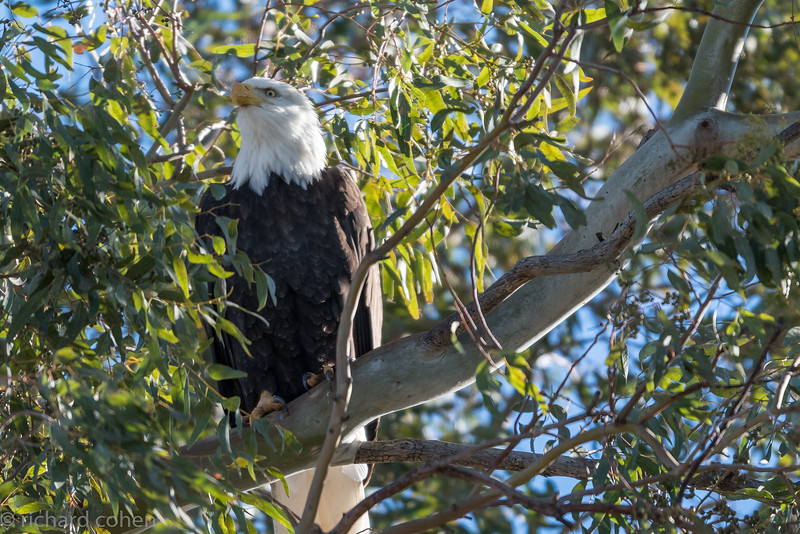 Eagle section of pics....almost missed this one, right at entrance to SNWR.