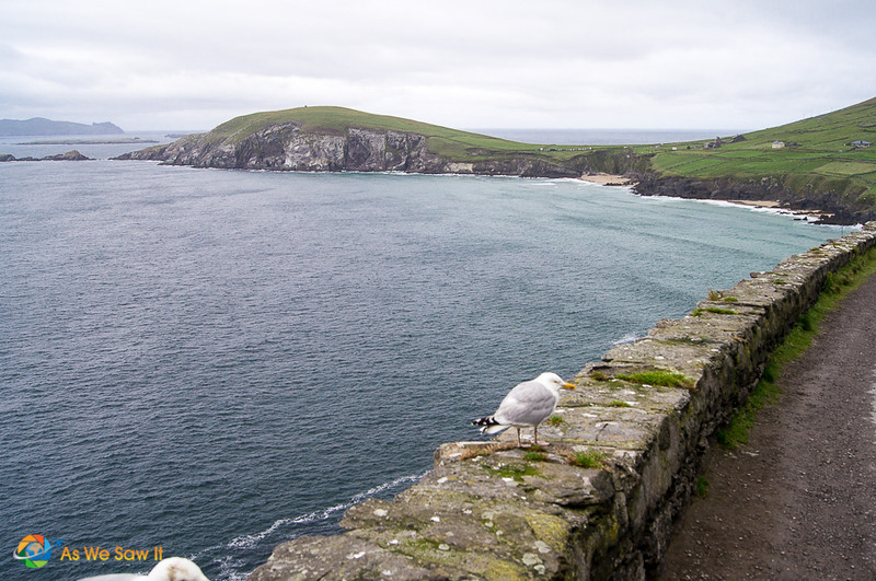 seagull on rock wall along Slea Head Dingle Ireland. Water and hills in background