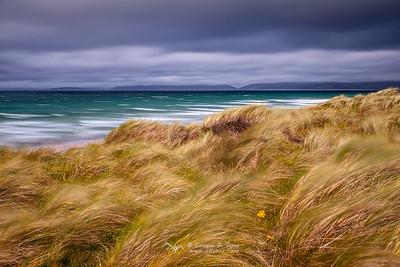 Pintado por el viento, Playa de Rossbeigh, Anillo de Kerry, Rep. Irlanda