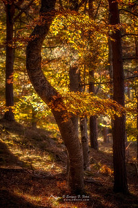 Enchanted forest 3, P. Nt. Sierra Cebollera, La Rioja