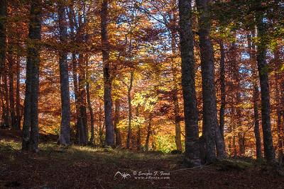 Enchanted forest 1, P. Nt. Sierra Cebollera, La Rioja