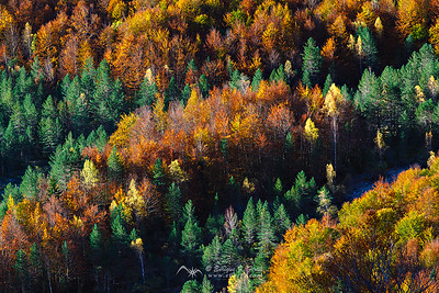 Autumn rhythm, Valle de Pineta, Huesca