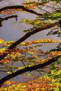 Autumn grid, Valle de Pineta, Huesca
