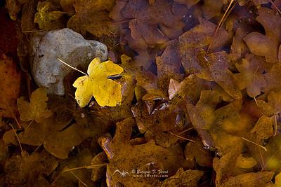 Mar de hojas