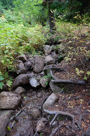 A roots and rocks section of trail