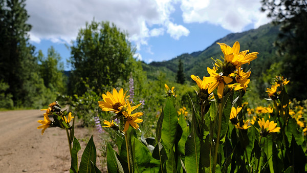 Wildflowers along the descent back to Leavenworth