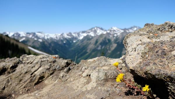 Flowers growing on the ridge