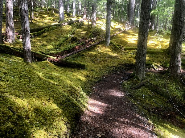 Neatly manicured mossy trails